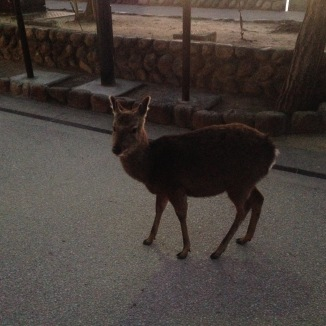 I didn't like it though. Deer creep me out.