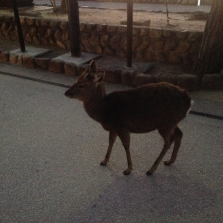 The deer greet you at the door.